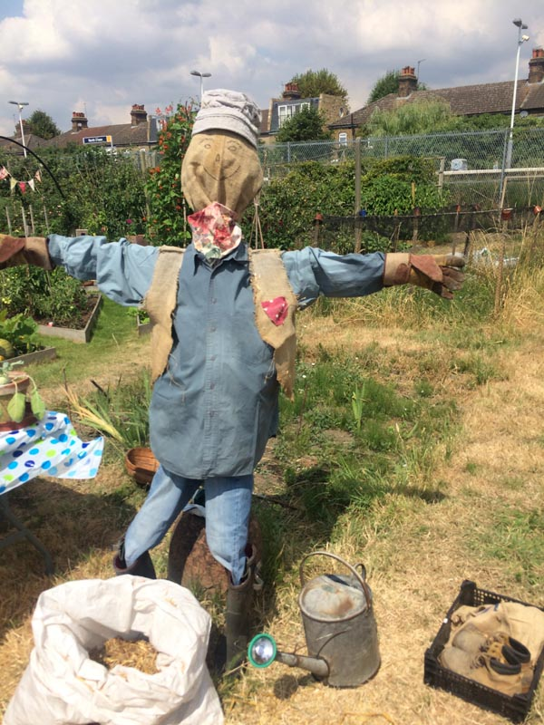 Scarecrow at the allotment